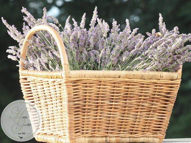 Lavendel Korb