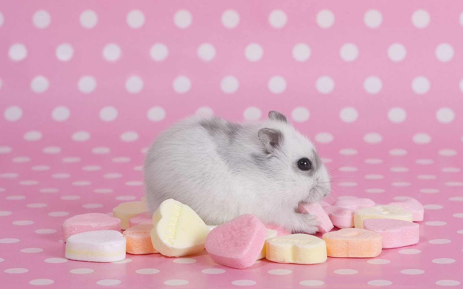 Hamster Gratis
