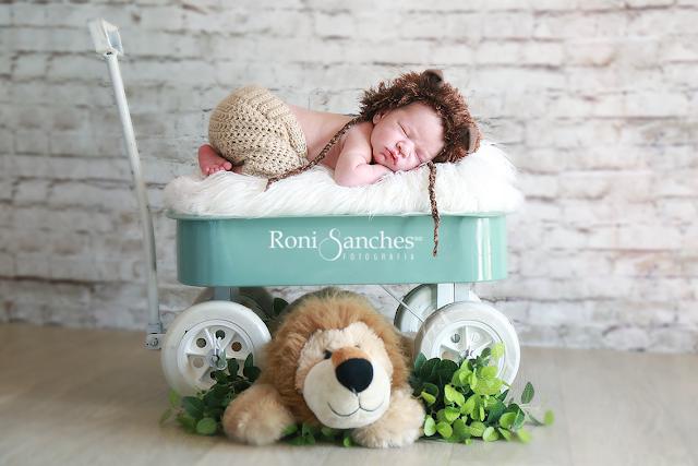 Newborn leãozinho
