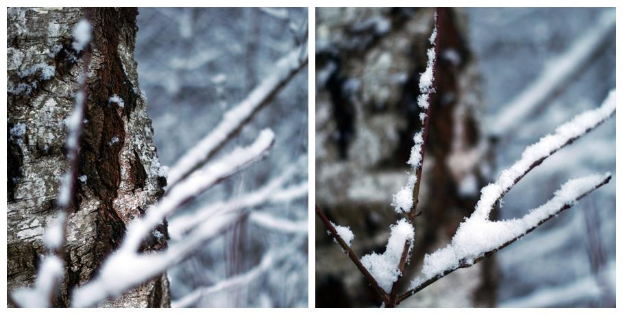 Blog + Fotografie by it's me! - Winter für einen Tag - Collage eines Baumstamms und verschneiten Zweigen