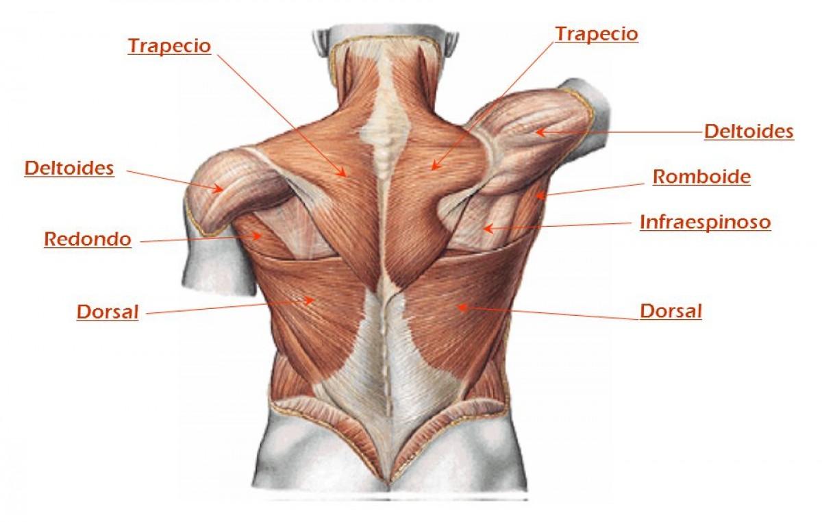 Anatomia | Armonía y Estética