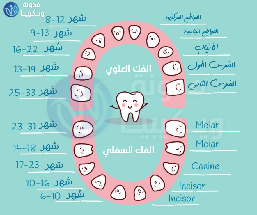 مخطط أسنان الأطفال