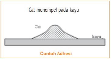 Gambar contoh adhesi - pengertian dan contoh adhesi