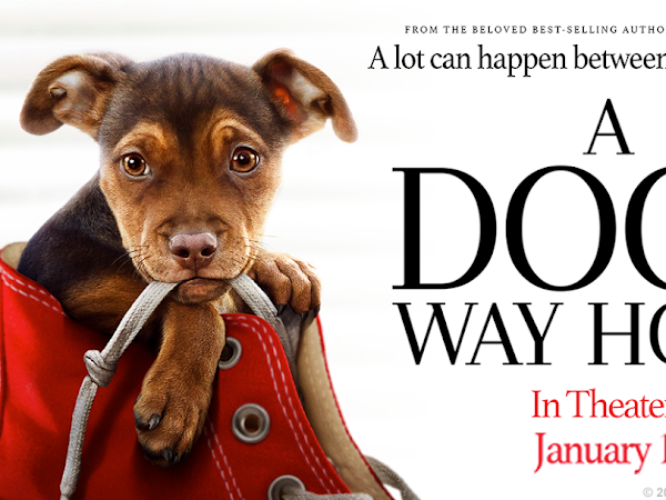 A Dog's Way Home in Theaters this Friday Jan 11th  + Giveaway