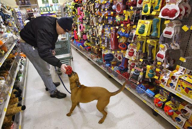 Pet Shops em Miami