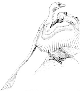 Baby Archaeopteryx Dinosaur Coloring Pages Images