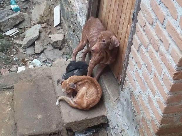 Animais eram mantidos em uma residência no município de Jequié. f65aa33135b7