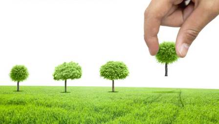 أهمية الشجرة في الحياة