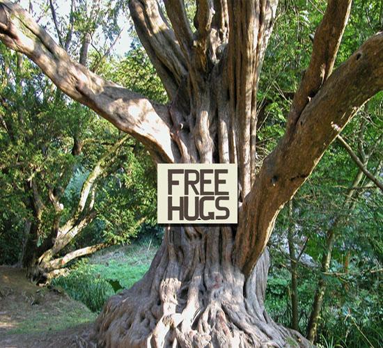 Most Popular Trees On The Big Island