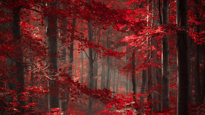 red-color-forest-for-birds-in-foreign-good-location-pics