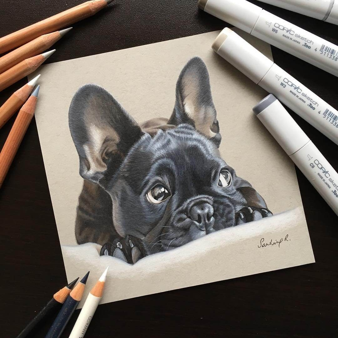 03-French-Bulldog-Frenchie-Sandrine-R-Sweet-Realistic-Animal-Portrait-Drawings-www-designstack-co