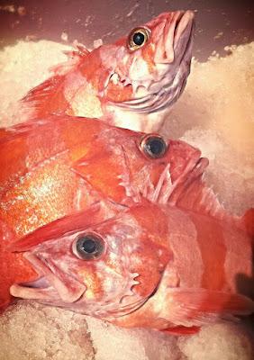 flag rockfish, barber-pole rockfish