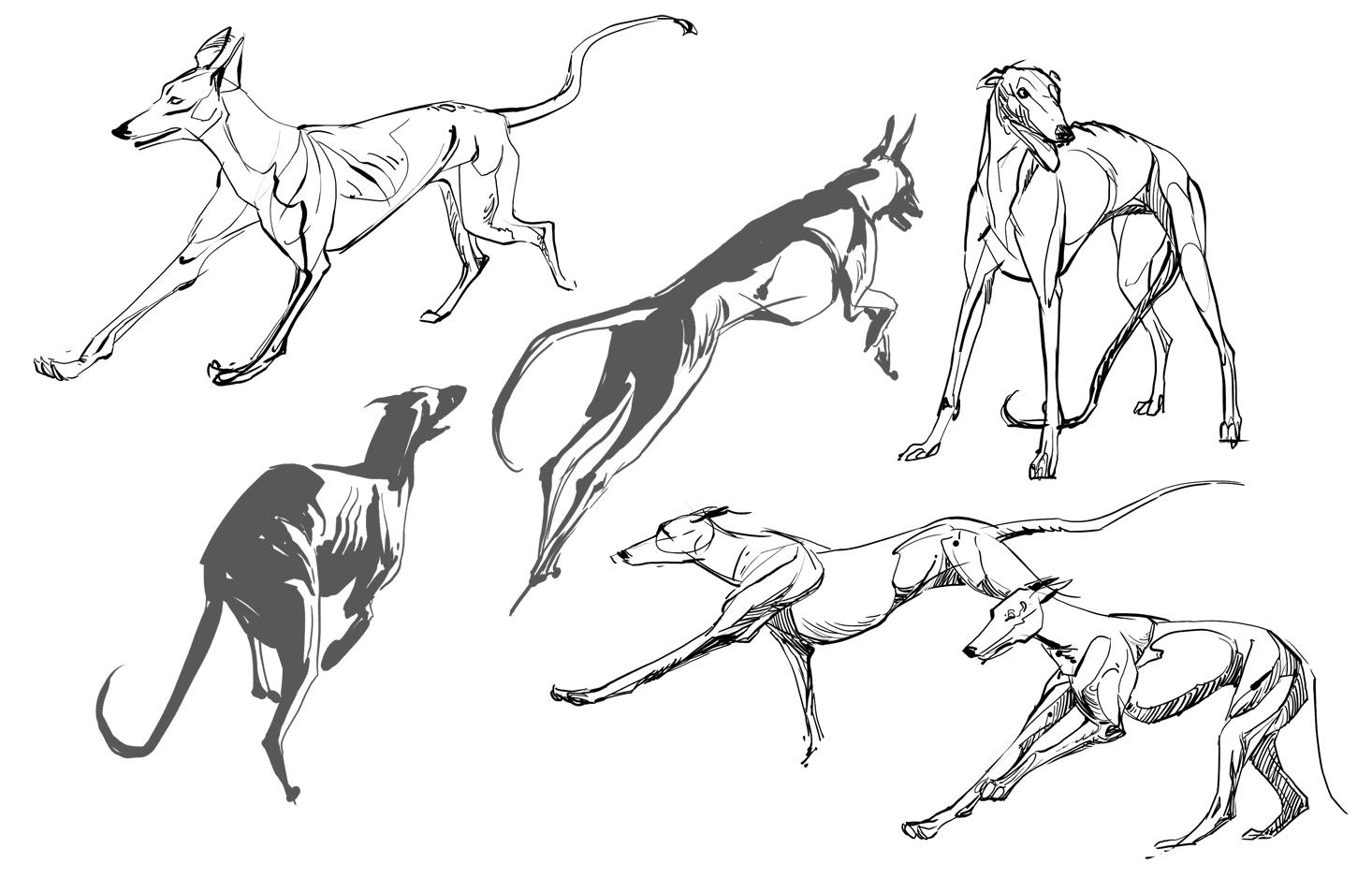 Animal Blog Doggies