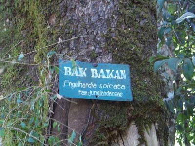hutan senaru,bak bakan,santri dan alam