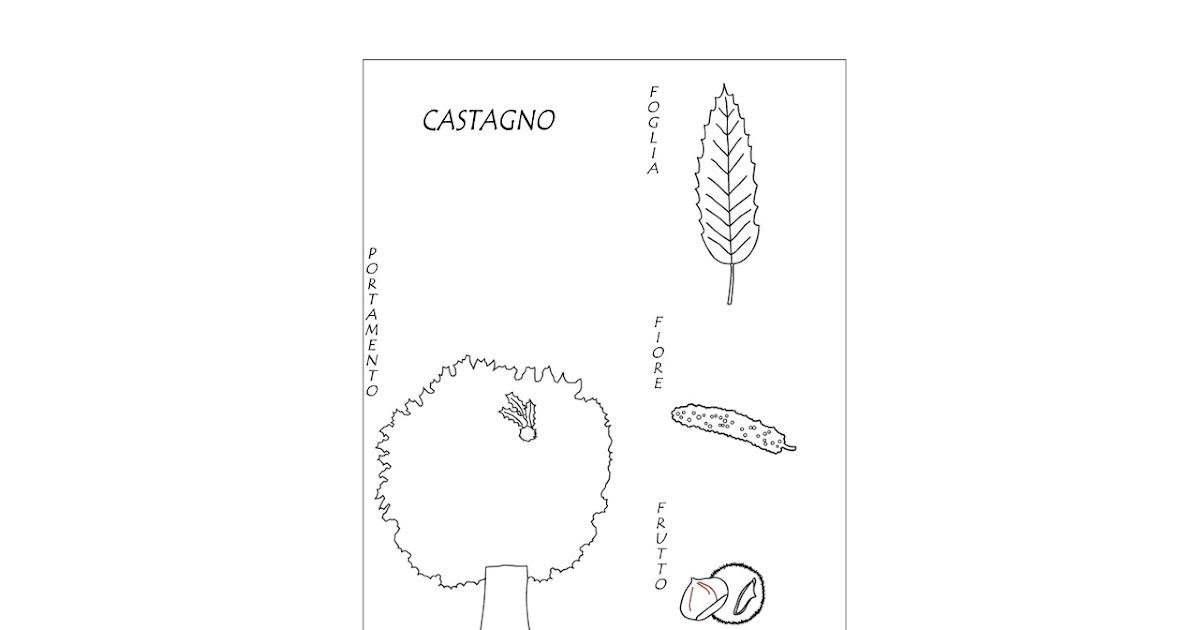 Riccio Castagna Da Colorare