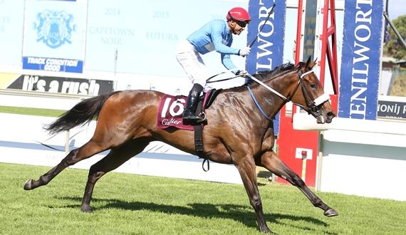 Oh Susanna - horse