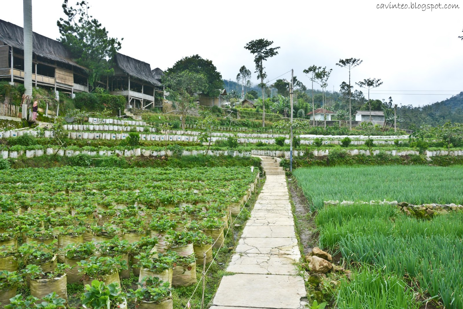 Entree Kibbles: Saung Gawir Restaurant - View of the Hills ...