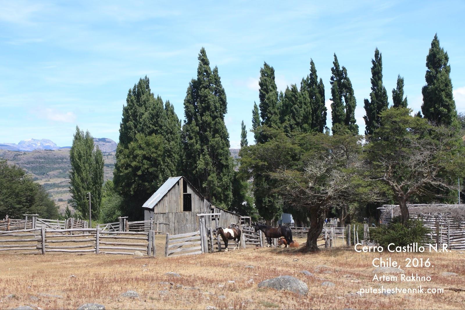 Лошади в чилийской деревне