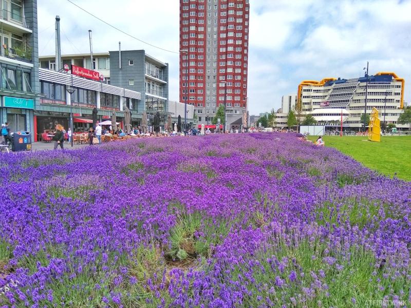 Poffertjessalon seth Rotterdam markthal lavender field outdoor terrace