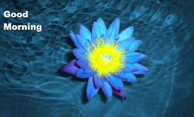 Blue lotus good morning images and wallpapers