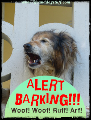 Alert Barking - Stop Barking Dog - my dog barks at everything