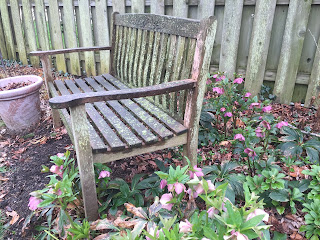 purple helleborus with wood bench