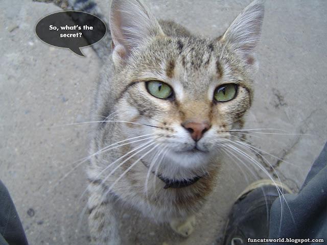 Close Cat picture