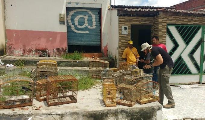 Aves silvestres resgatadas em Pindobaçu são soltas em parque ecológico de Miguel Calmon