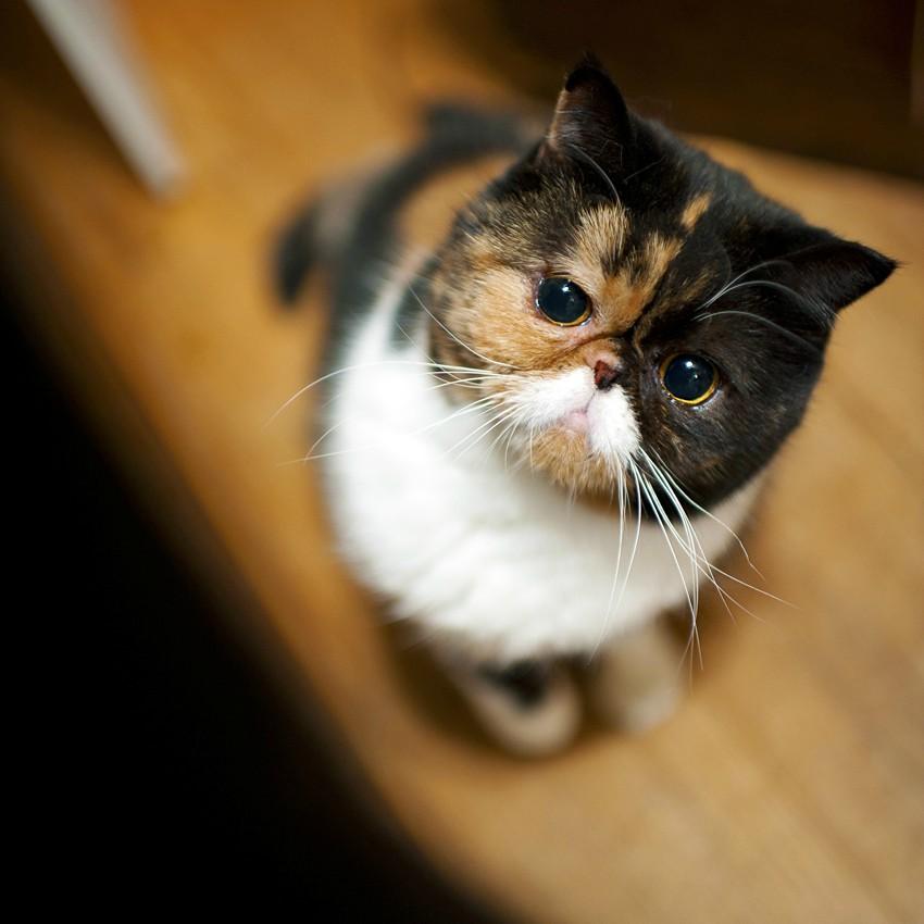 Funny cats - part 52 (30 pics + 10 gifs)   Amazing Creatures