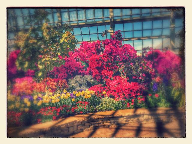 Garfield Park Conservatory Flowers