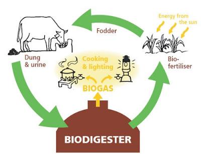 Cara Membuat Biogas Dari lmbah Kotoran ternak