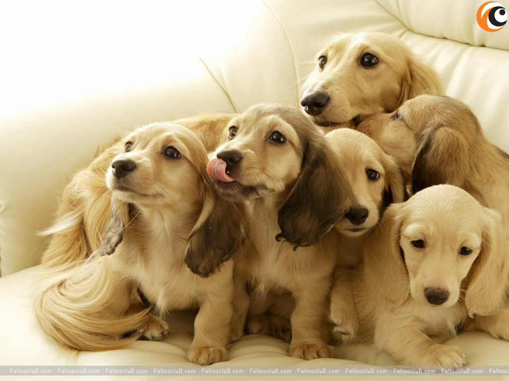 Lovely Pet Wallpaper, Lovely Pets Pictures & Animal