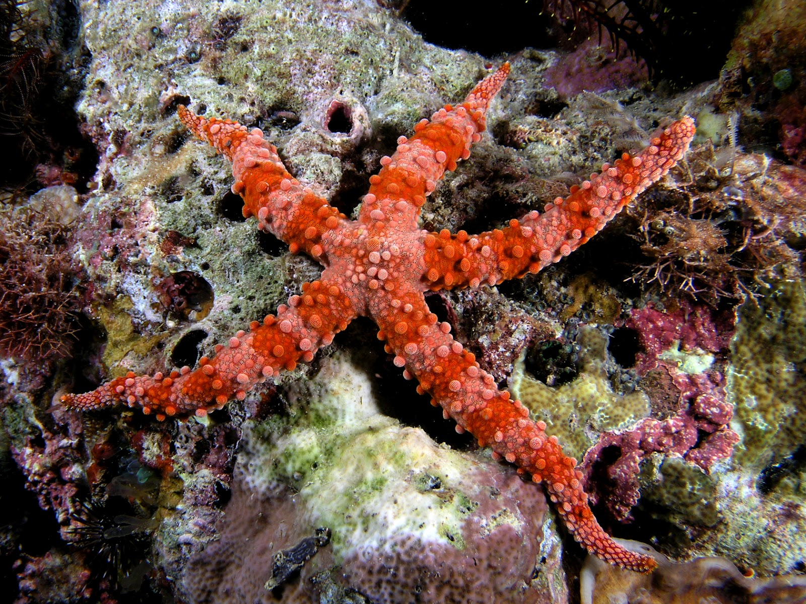 Sea Star | I love the sea............... | Pinterest