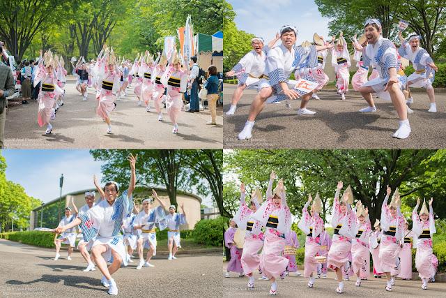 阿波踊り団体、紅連を小金井こどもフェスタで撮った写真を4枚並べてまとめた写真