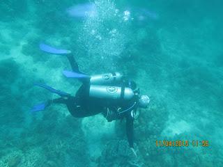 Diving Pulau Pramuka