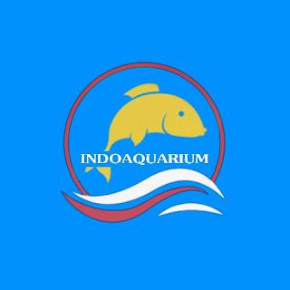 Ikan hias, aquarium, budidaya ikan, Umpan ikan, Hobi, Seni