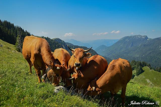 Alpage en Charteuse