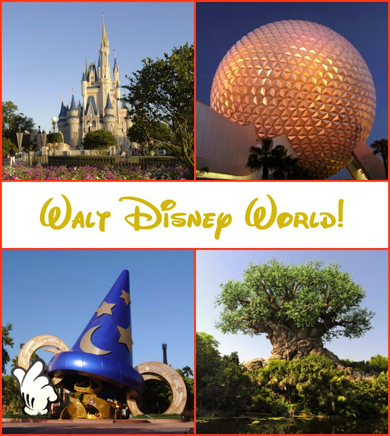 Mail Carrier Family' Top 5 Attractions And Entertainment Disney' Animal Kingdom