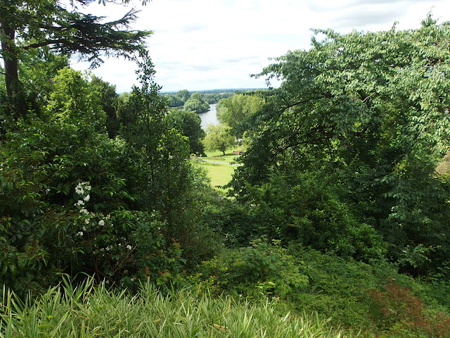 A final look through the trees towards the river