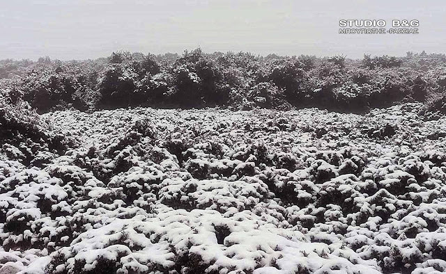 Αργολίδα: Χιόνισε και στο Αραχναίο