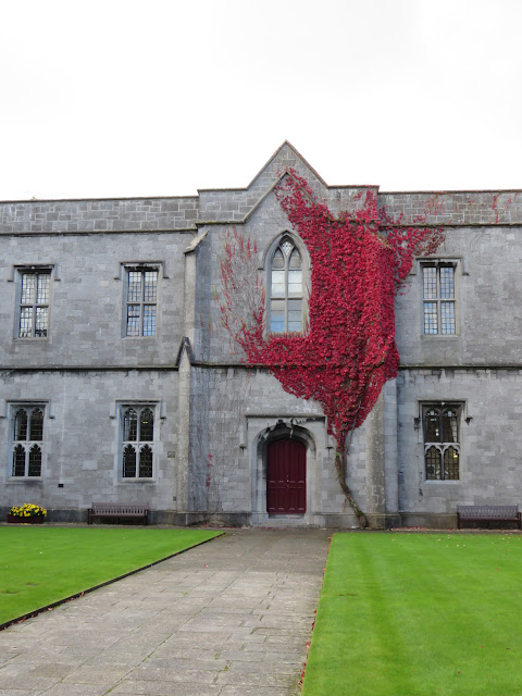 Fiery red ivy in Autumn on the buildings of the NUI Galway Quadrangle