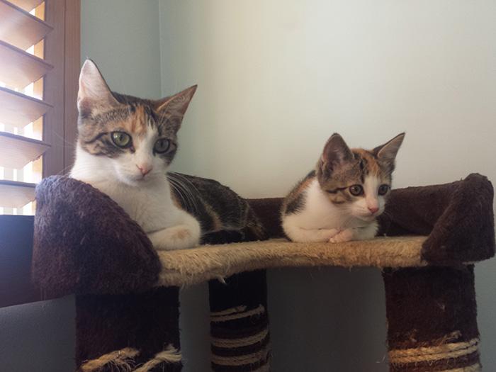 Gambar Kucing Dan Anaknya godean.web.id