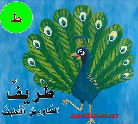 قصة الحرف( ط) طريف الطاووس لغة عربية الصف الاول الفصل الثانى 2020
