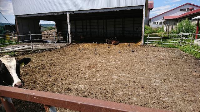 牛舎の鳩被害