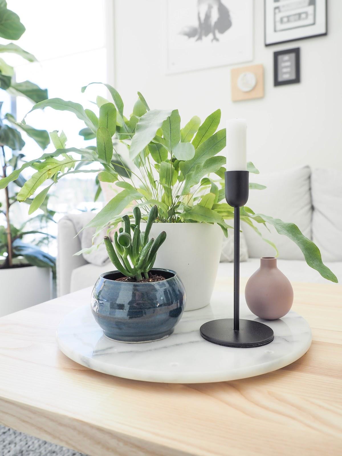 viherkasvi, sisustus, olohuone, sohvapöytä, asetelma