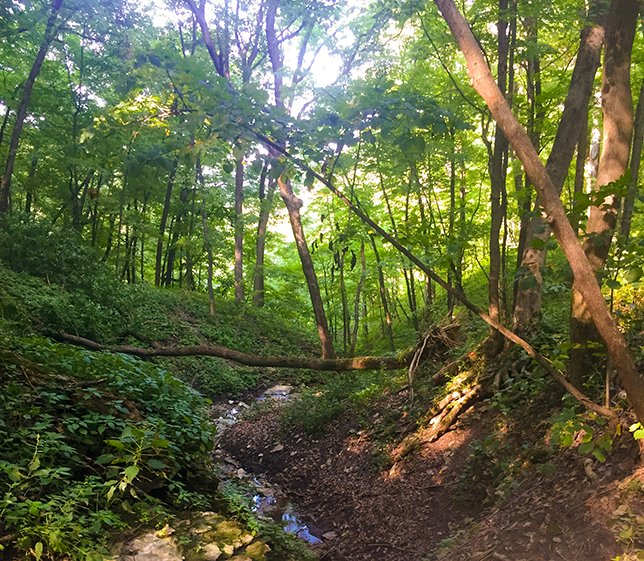 Warriors Path State Park Campground: Wisconsin Explorer: Hiking Sand Cave Trail At Wyalusing