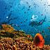 Trước khi Formosa gây thảm họa, người Việt đã hủy diệt hệ sinh thái biển như thế nào?