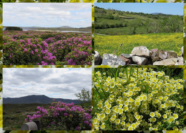 Cycling the Great Western Greenway - County Mayo, Ireland - Carpets of Wildflowers