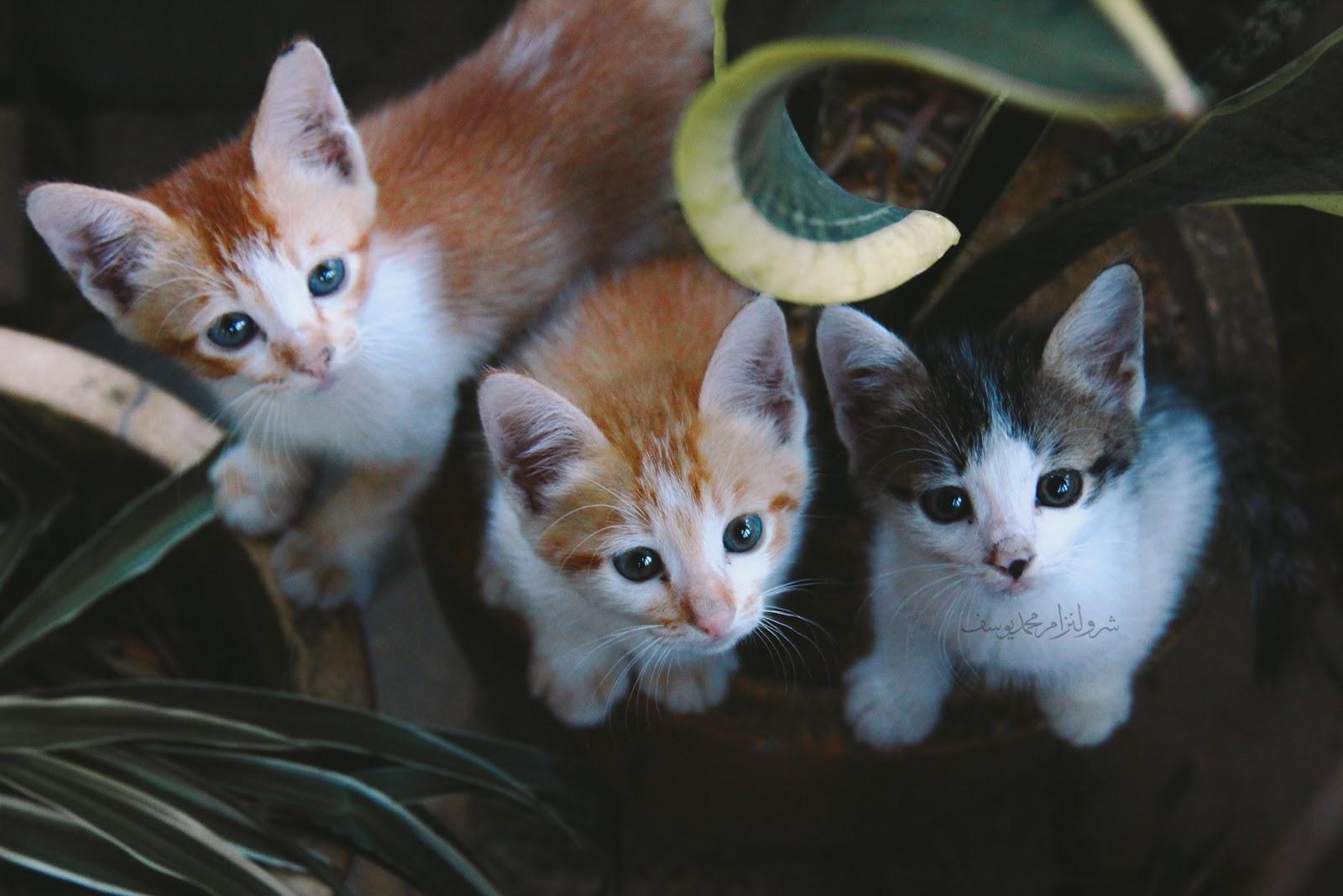 Anak Kucing Yang Comel Dan Riang - 8
