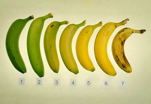 Banana is known as a very healthy fruit, a source of potassium, essential for the heart, and a variety of vitamins. But do you know at what stage of ripening a banana is the most useful?